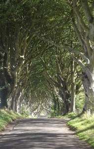 Dark Hedges, the road to Armoy