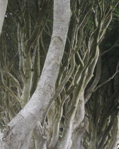 I see where Toklien found his inspiration for the Ents