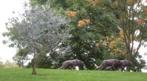 wolves on the campus 3