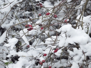 ax snow (15)