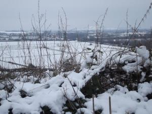 ax snow1 (1)