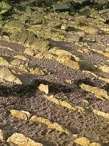 Sedimentary rocks maybe?