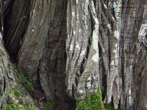 lichen (11)